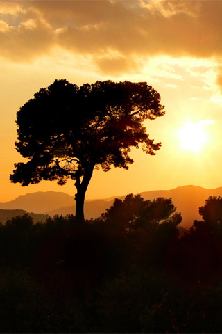 golden wallpaper. Golden Sun iPhone wallpaper
