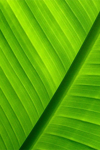 iPhone Green Free Wallpaper, Green iPhone Background, Cool ...