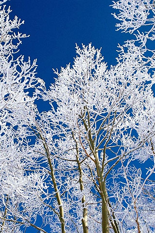 iPhone Snow tree Free Wallpaper, Snow tree iPhone Background, Cool ...