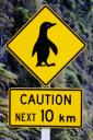 Penguin Crossing Sign (free iPhone wallpaper)